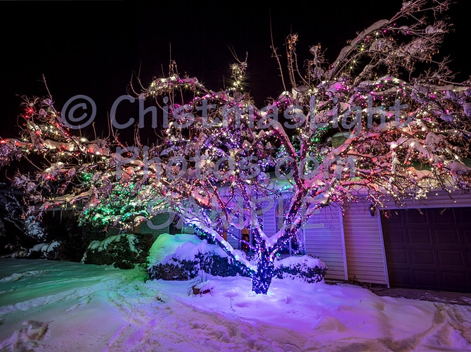 138 min Christmas light strands in tree - Vance Brand Photography