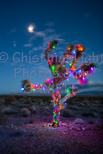Joshua tree with Christmas Lights - Vance Brand Photography