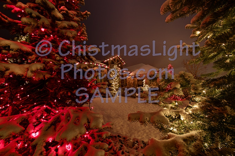 Love of Christmas lights looking through the trees - Vance Brand Photography