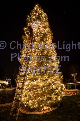 Christmas tree installation - Vance Brand Photography