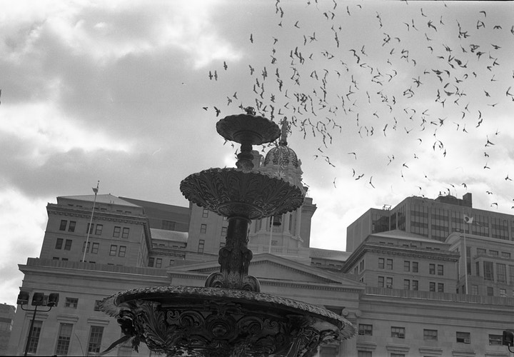 borough hall with murmuration - Victor Cohen