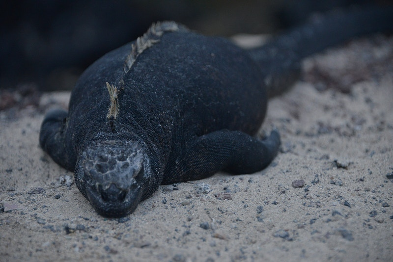 Galapagos Album - William Dougall Photography