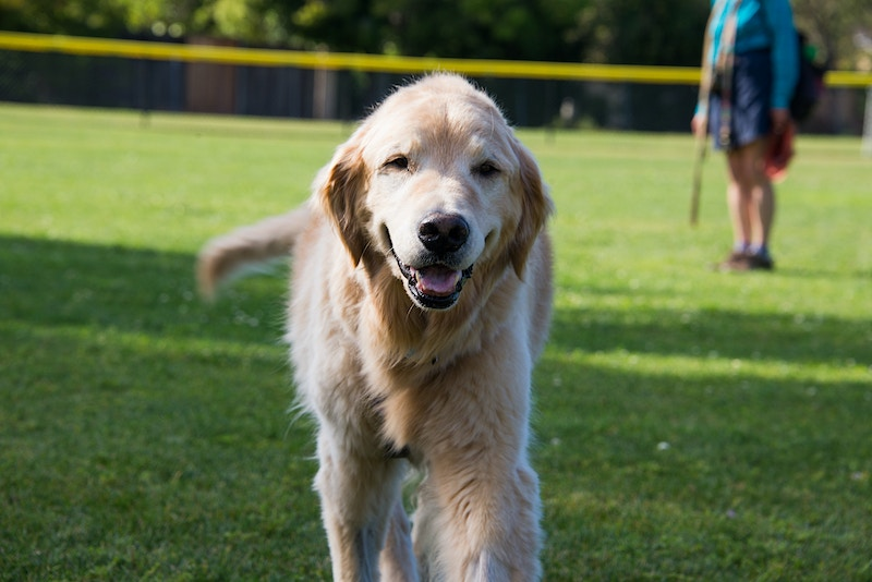 Dog Parks - William Dougall Photography