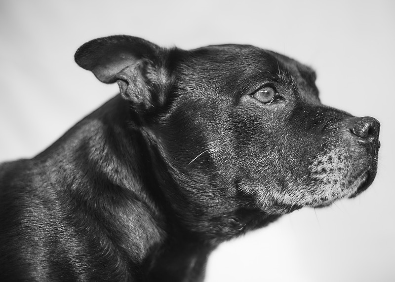 Pet Portraits - warren bailey photography