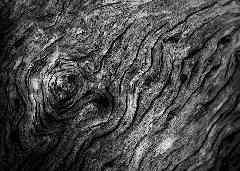 Woodgrain - Zak Collins // Charleston Fine Art Photography