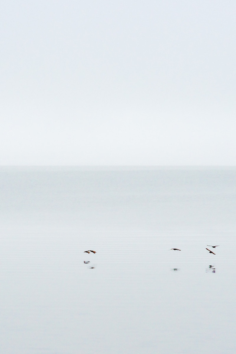 Four Birds - Zak Collins // Charleston Fine Art Photography